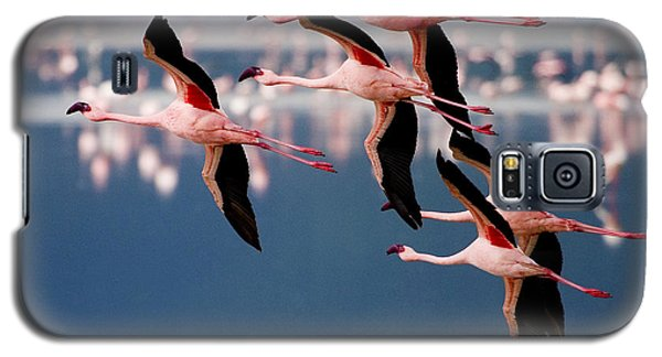 Flamingos In Flight-signed Galaxy S5 Case