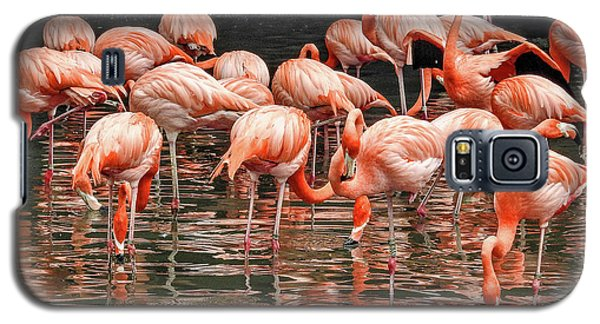 Flamingo Looking For Food Galaxy S5 Case