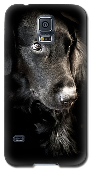 Flat Coated Retriever Galaxy S5 Case