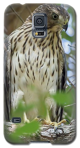 Fledgling Red-shouldered Hawk 2 Galaxy S5 Case
