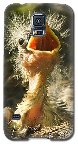 Fledgling Yellow Warbler Galaxy S5 Case