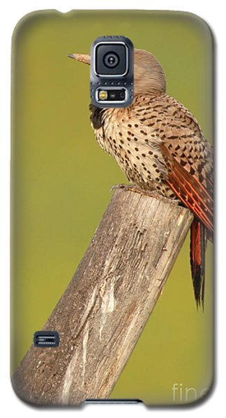 Galaxy S5 Case featuring the photograph Flicker Asleep On Perch by Max Allen