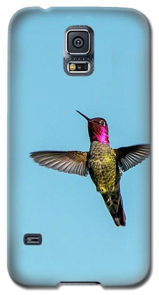 Flight Of A Hummingbird Galaxy S5 Case
