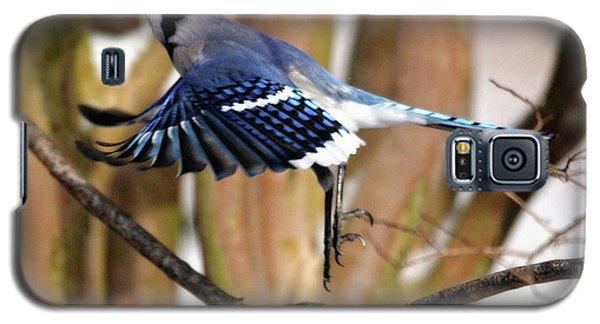 Flight Of The Blue Jay Galaxy S5 Case