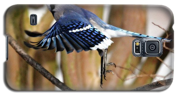 Flight Of The Blue Jay Galaxy S5 Case