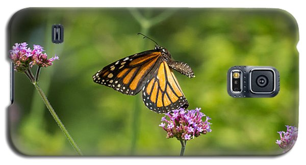 Flight Of The Monarch 1 Galaxy S5 Case