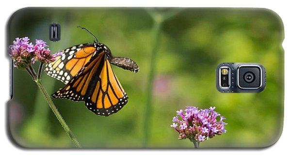 Flight Of The Monarch 2 Galaxy S5 Case