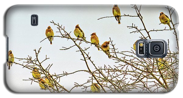 Flock Of Cedar Waxwings  Galaxy S5 Case