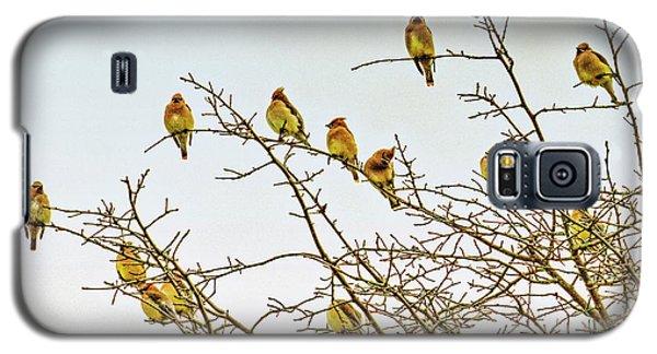 Flock Of Cedar Waxwings  Galaxy S5 Case by Geraldine Scull
