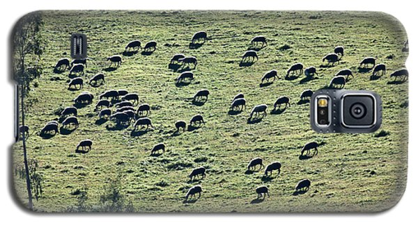 Galaxy S5 Case featuring the photograph Flock Of Sheep by Bruno Spagnolo