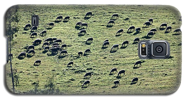 Flock Of Sheep Galaxy S5 Case