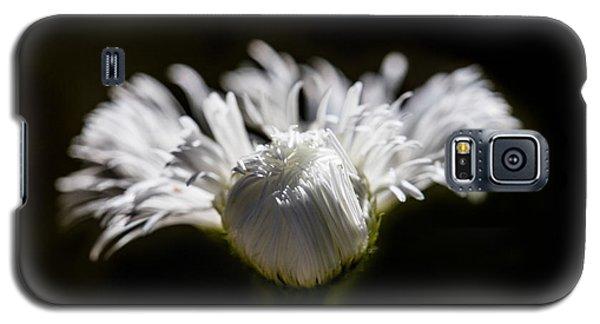 Floral Chiaroscuro Galaxy S5 Case