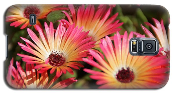 Floral Expectancy Galaxy S5 Case