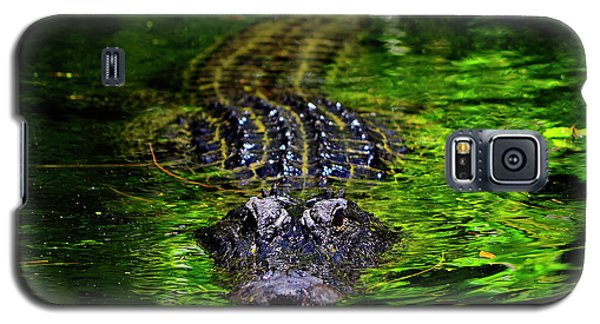 Florida Alligator Encounter Galaxy S5 Case