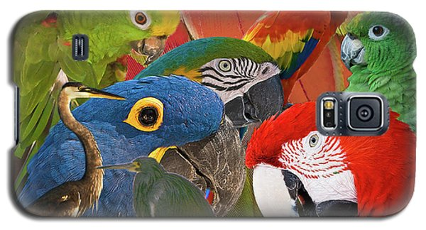 Florida Birds Galaxy S5 Case