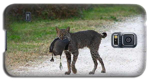 Florida Bobcat Catches An Evening Snack Galaxy S5 Case