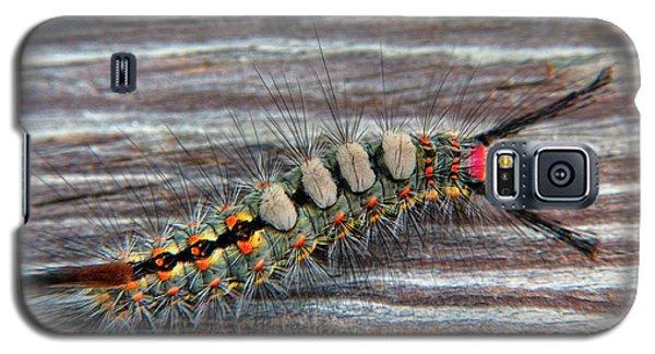 Florida Caterpillar Galaxy S5 Case