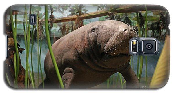 Florida Manatee Diorama Galaxy S5 Case