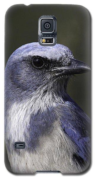 Florida Scrub Jay Galaxy S5 Case by Elizabeth Eldridge
