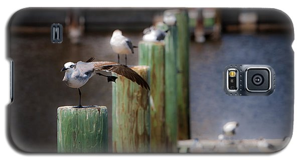 Galaxy S5 Case featuring the photograph Florida Seagull Playing by Jason Moynihan