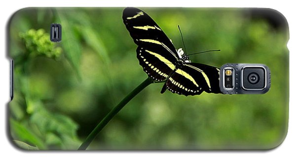 Florida State Butterfly Galaxy S5 Case by Greg Allore