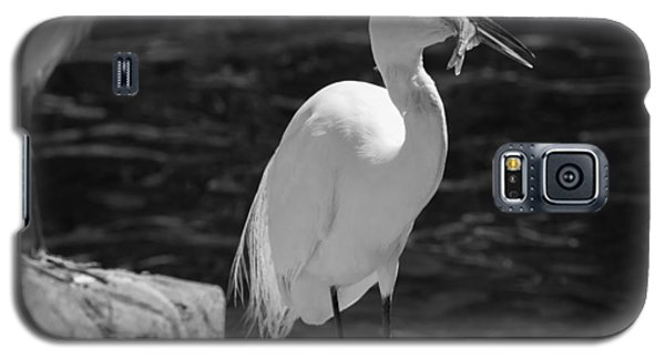 Galaxy S5 Case featuring the photograph Florida White Egret by Jason Moynihan