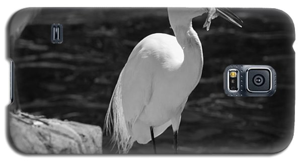 Florida White Egret Galaxy S5 Case