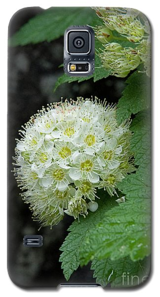 Galaxy S5 Case featuring the photograph Flower Ball by Rod Wiens