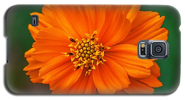 Galaxy S5 Case featuring the photograph Flower Color by Edward Peterson