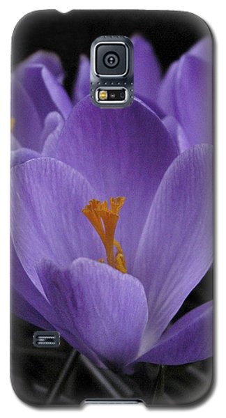 Flower Crocus Galaxy S5 Case