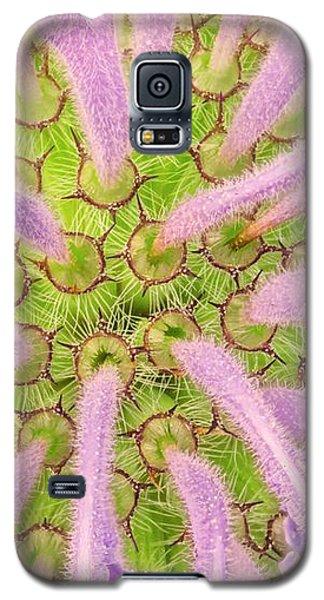 Flower Interior, Wild Bergamot Or  Bee Balm Galaxy S5 Case by Jim Hughes