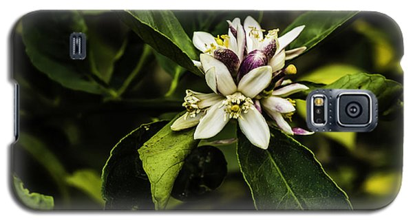 Flower Of The Lemon Tree Galaxy S5 Case