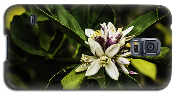 Flower Of The Lemon Tree Galaxy S5 Case