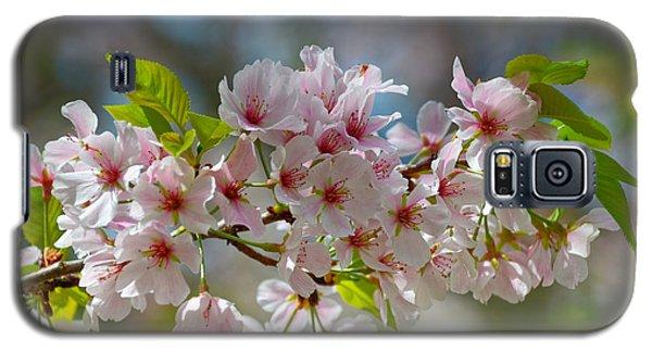 Flower Spray Galaxy S5 Case by Linda Brown