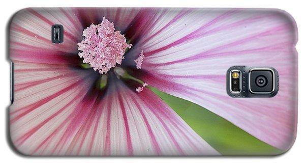 Galaxy S5 Case featuring the photograph Flower Star by Elvira Butler
