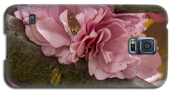 Flowering Almond I Galaxy S5 Case