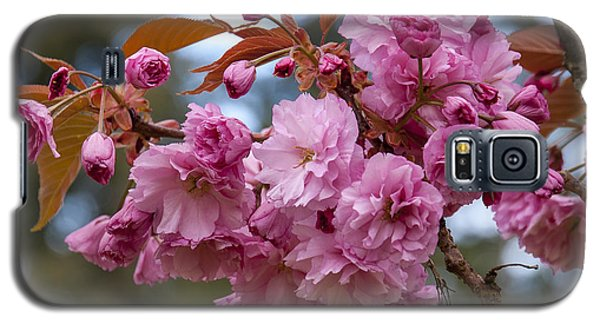 Flowering Almond II Galaxy S5 Case