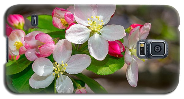 Flowering Cherry Tree Blossoms Galaxy S5 Case