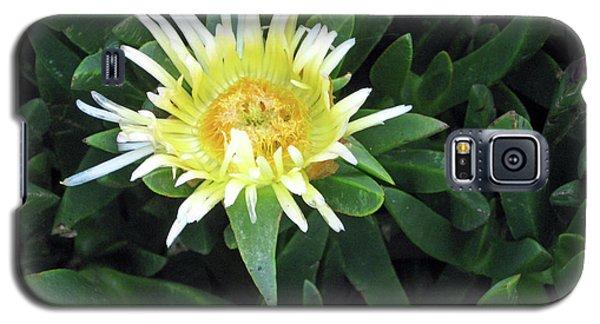 Flowering Ice Plant Galaxy S5 Case