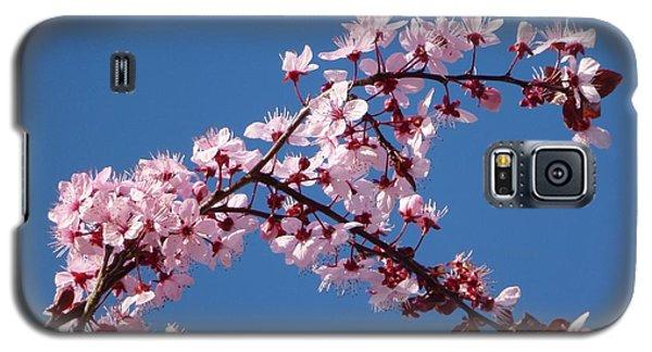 Flowering Of The Plum Tree 4 Galaxy S5 Case