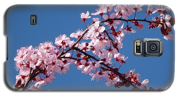 Flowering Of The Plum Tree 4 Galaxy S5 Case