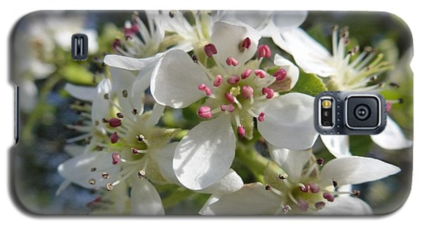 Flowering Of White Flowers 2 Galaxy S5 Case