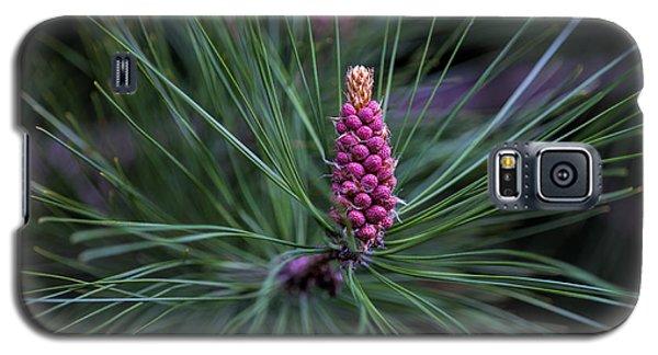 Flowering Pine Cone Galaxy S5 Case