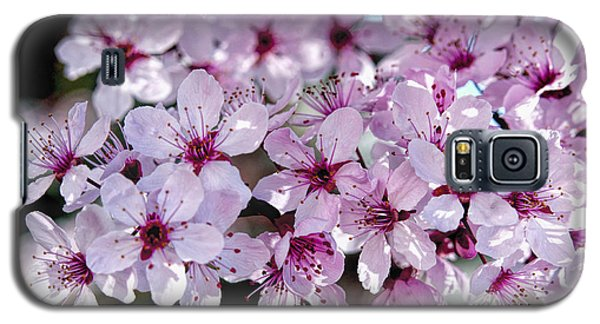Flowering Plum Galaxy S5 Case