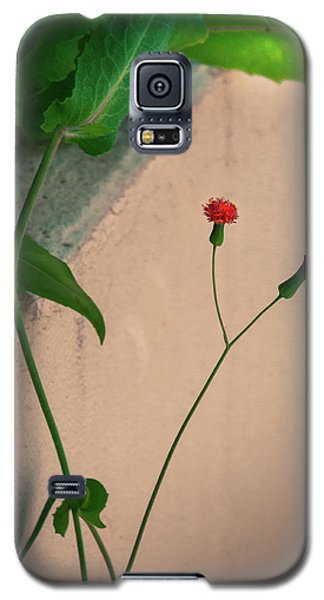 Flowers, Leaves And Wall Galaxy S5 Case