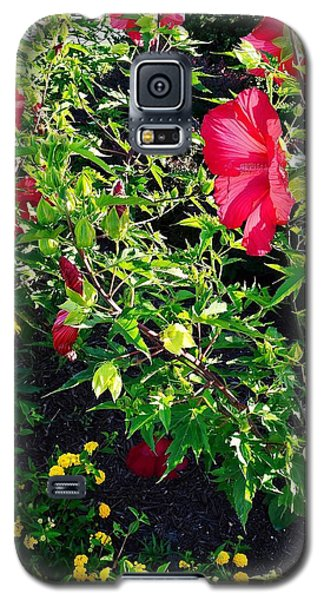 Flowers Of Bethany Beach - Hibiscus And Black-eyed Susams Galaxy S5 Case