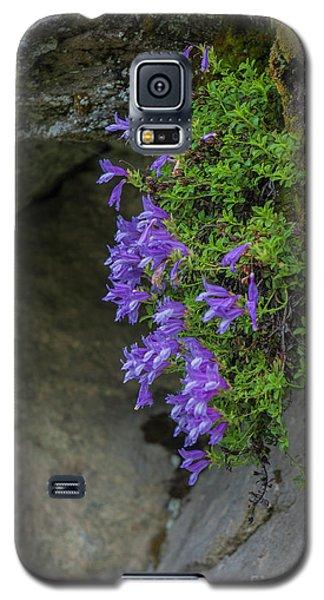 Flowers Galaxy S5 Case by Rod Wiens