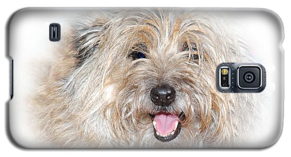Galaxy S5 Case featuring the photograph Fluff Pup by Debbie Stahre