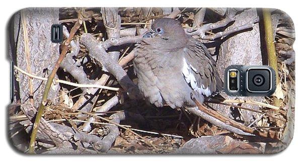 Fluffy Dove Galaxy S5 Case