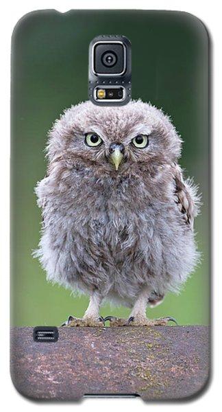 Fluffy Little Owl Owlet Galaxy S5 Case